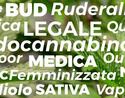 cannabis canapa marijuana