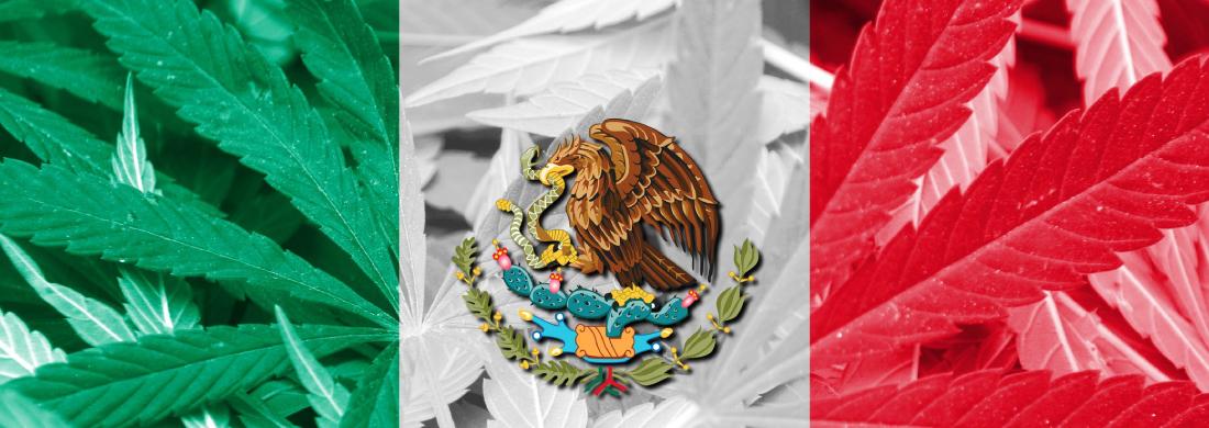 messico cannabis