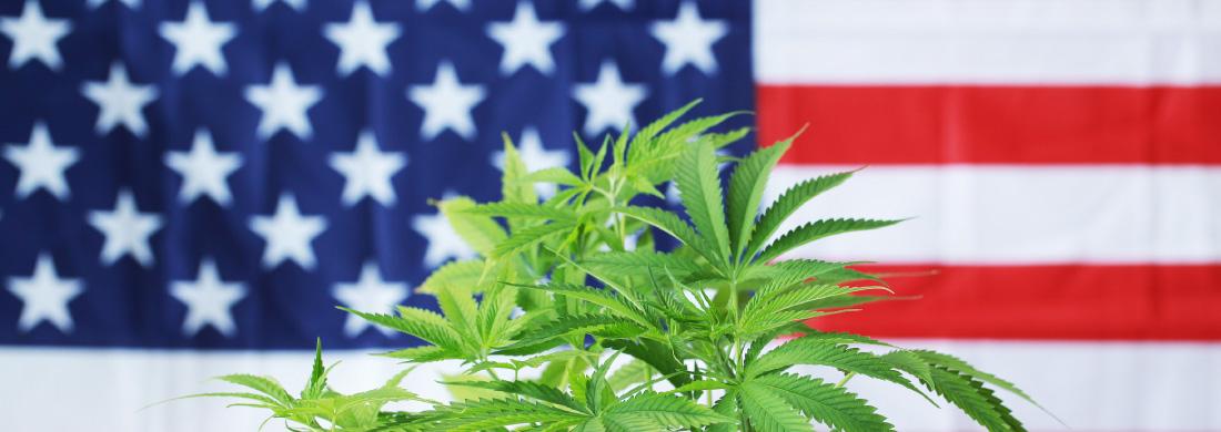 cannabis usa economia